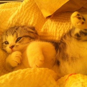 Meredith Swift: cutest kitty ever.