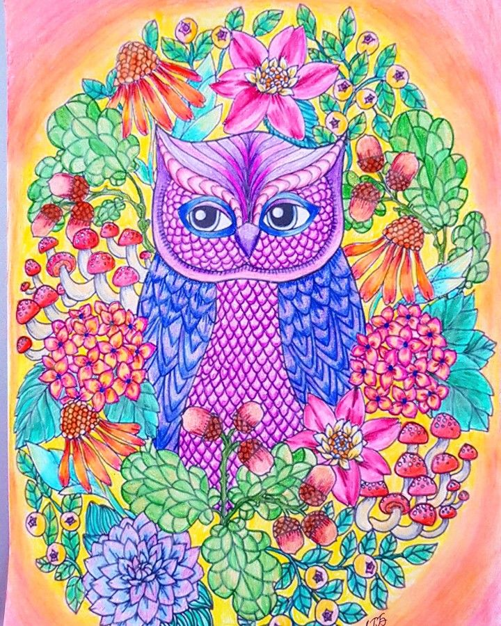 Owls coloring page
