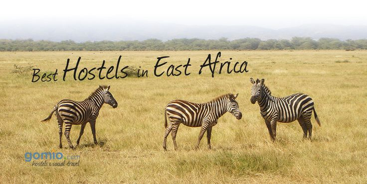 Discovering #EastAfrica?  Check out the Best #Hostels in East Africa here:   http://www.gomio.com/en/best-hostels-in-east-africa.php — in #Tanzania. #Malawi #Zebra #Animals #Backpacking #Fun #Exploring #experience #Africa #lions #safari #hostel #accommodation