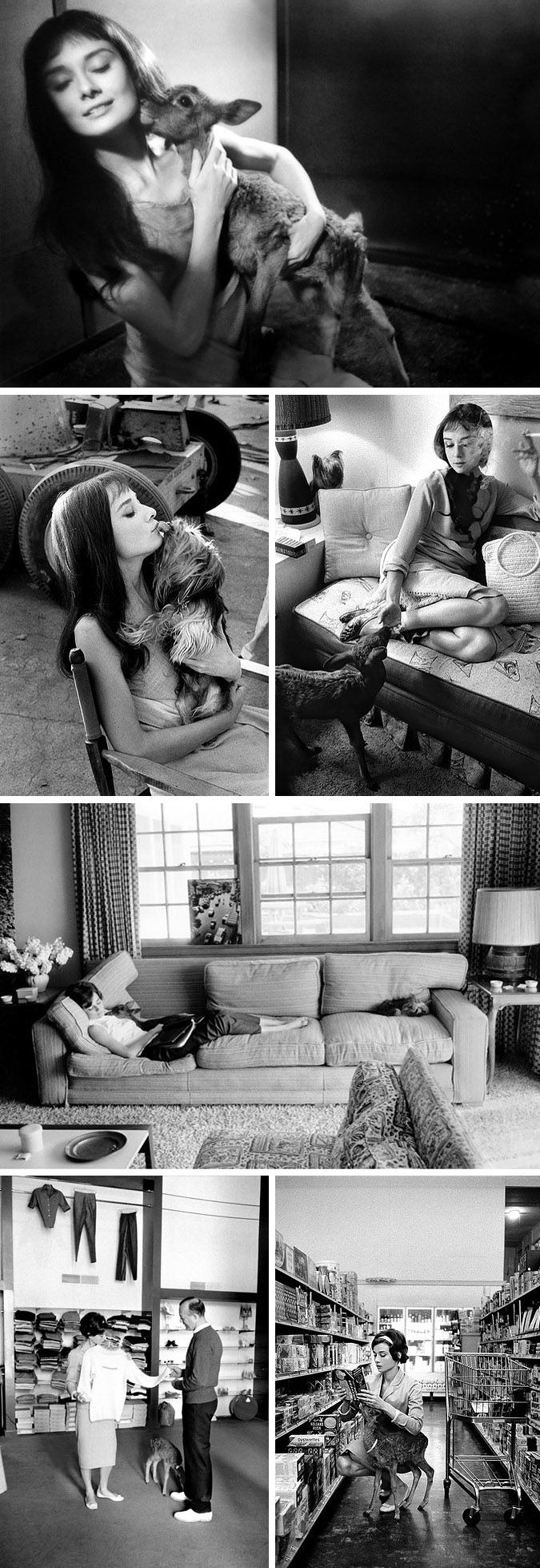 some cool shots Audrey Hepburn..with her pets ..a dog, named Mr. Famous and a Deer she called LP.  and yes that is the dear laying across her chest and the dog at her feet while she is napping on the couch!  HA!  Gotta love Audrey..