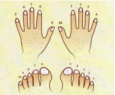 El ve ayak tırnakları numaralandırılmış şekilde kesilmelidir.