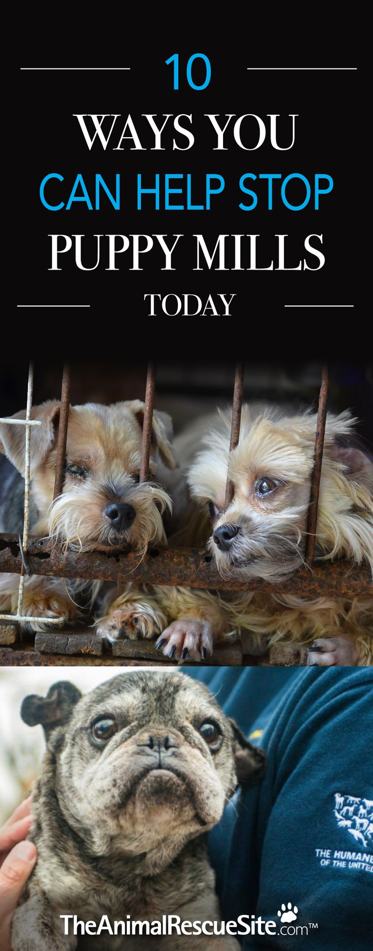 What You Can Do To Stop Puppy Mill Cruelty