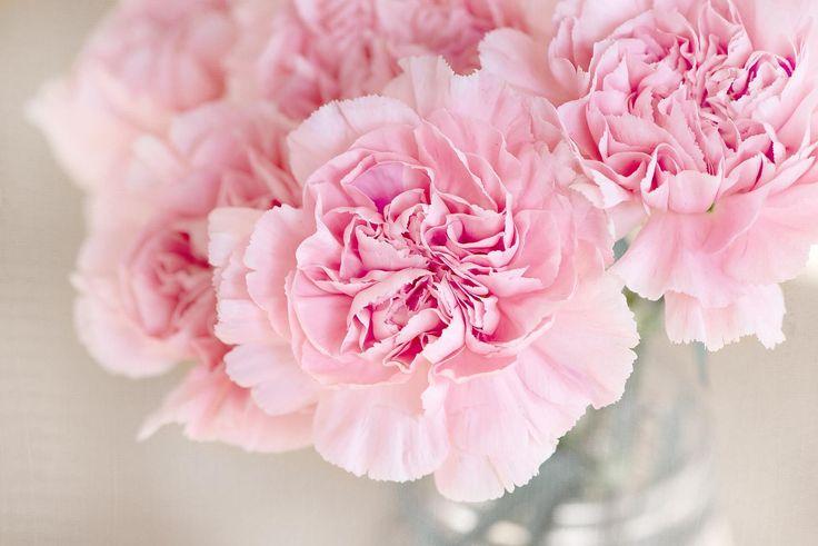 Mit unserer Kunstblumen kaufen Webseite ermöglichen wir es Dir, schnell und unkompliziert für deine Ansprüche geeignete Kunstblumen zu finden. Wir haben für unsere Vergleiche nur qualitativ hochwertige Kunstblumen ausgesucht und unter die Lupe genommen. So kannst du dich gänzlich von ihrem äußeren Erscheinungsbild, sowie ihrem Charme verzaubern lassen.