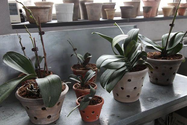 Hay macetas y sustratos especiales para orquídeas, diseñados específicamente para estas raíces tan especiales. Aprende cómo hacer el trasplante de estas preciosas plantas...