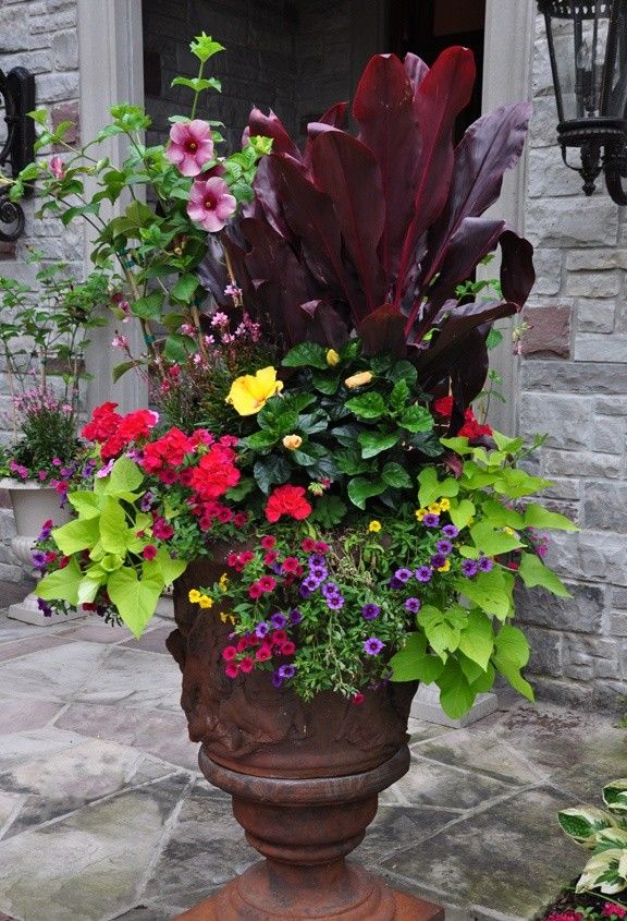 in a small courtyard or patio you have to make use of containers for gardening - create a statement piece full of colour using a couple of different plants - replace them with others as they go out of season so you always have a full display.