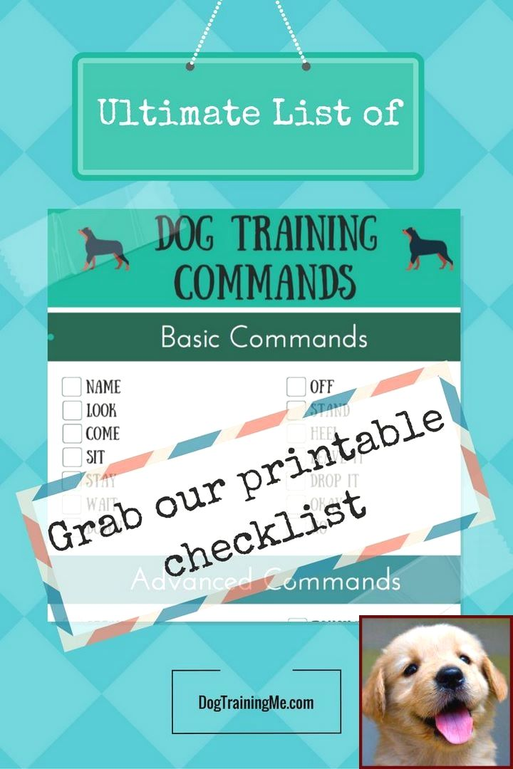 Dog Behavior Research Questions And Dog Training Courses Canada