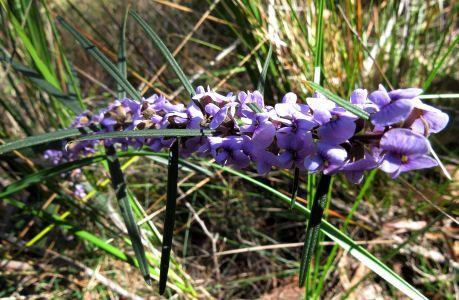 Parks Victoria - Baluk Willam Nature Conservation Reserve