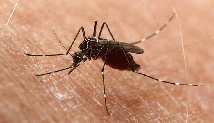 Home Remedies for #MosquitoBites #Health #HomeRemedies #Treatment #HealthyLiving #Medicine #Natural #Wellness #Cure #Nutrition #Explore #Healthy #Herbal #NaturalRemedies #Herbs Home Remedies for Mosquito Bites - Healthy Lifestyle