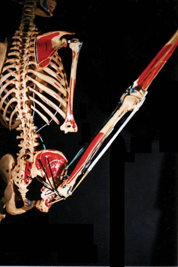 Excepcional Anatomía Danza Y Kinesiología Colección - Imágenes de ...