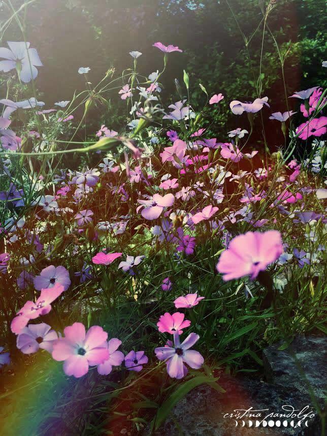 Photo by ©Cristina Pandolfo - www.cristinapandolfo.com - www.dryadesdesign.com
