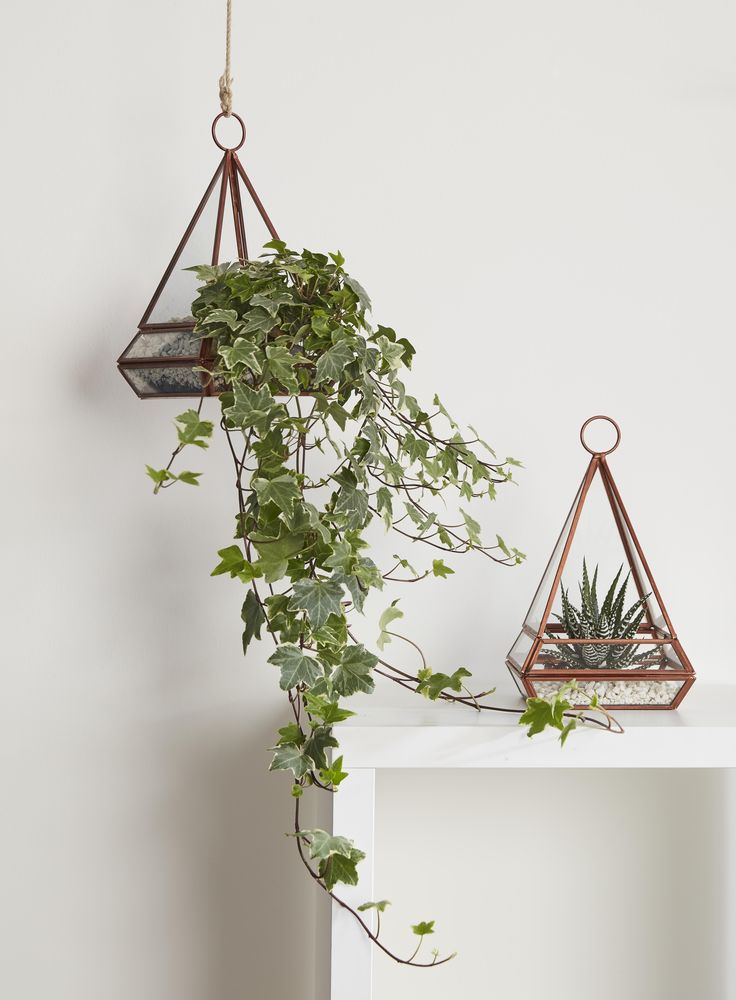 Green foliage and plants help to bring the outdoors into your home. You can create your own terrariums in just a few simple steps.