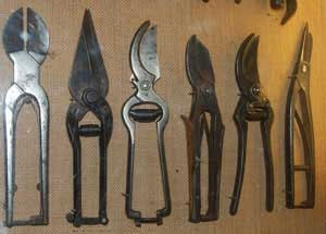 Victorian secateurs - garden tools