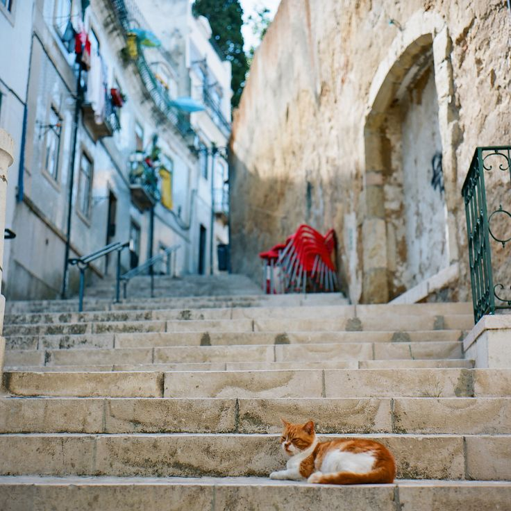 https://flic.kr/p/a8cEGr | Portugal* | My first stop on the Portuguese tour was Lisbon.  I took a walk in a hilly town called Alfama and met a resting cat. mew, mew : )  Rolleiflex 2.8F xenotar Kodak Ektar100 at Lisbon, Portugal