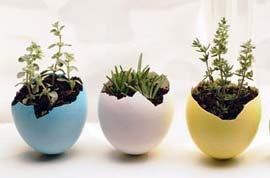 Eggshell planters (can be planted whole into the garden)Eggs Planters, Eggshell Planters, Easter Crafts, Eggs Shells, Plants, Gardens, Flower Pots, Easter Eggs, Easter Ideas