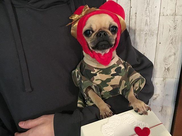 papa& brother❤️ happyバレンタイン🎁 愛を込めて💋  #パグ#チワワ#パグミックス#チワワミックス#雑種#愛犬#ミックス犬#ペット#ぶさかわ犬#バレンタイン#valentine#pug#chihuahua#mix#dog#mutt#cat#dogs#dogstagram#doglover#dogoftheday#mylove#instadog