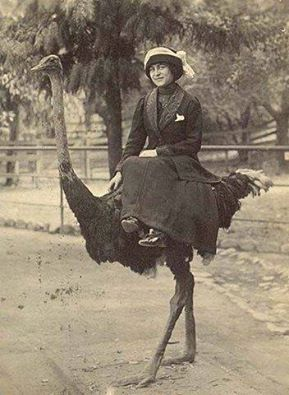 not ONLY riding an ostrich, but riding SIDESADDLE. Hat's off to you, lady.