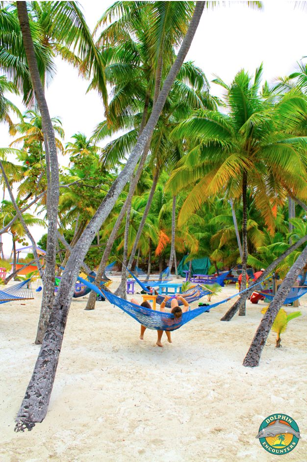 Relaxing in one of our hammocks! Dolphin Encounters, Blue Lagoon Island, Bahamas