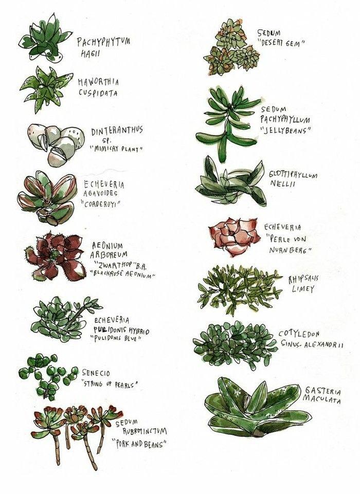 M s de 25 ideas incre bles sobre tipos de suculentas en - Como transplantar cactus ...