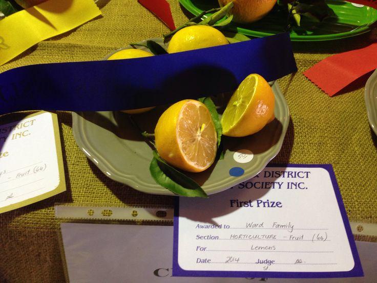 Samford Valley 2014 Show - First prize Lemons