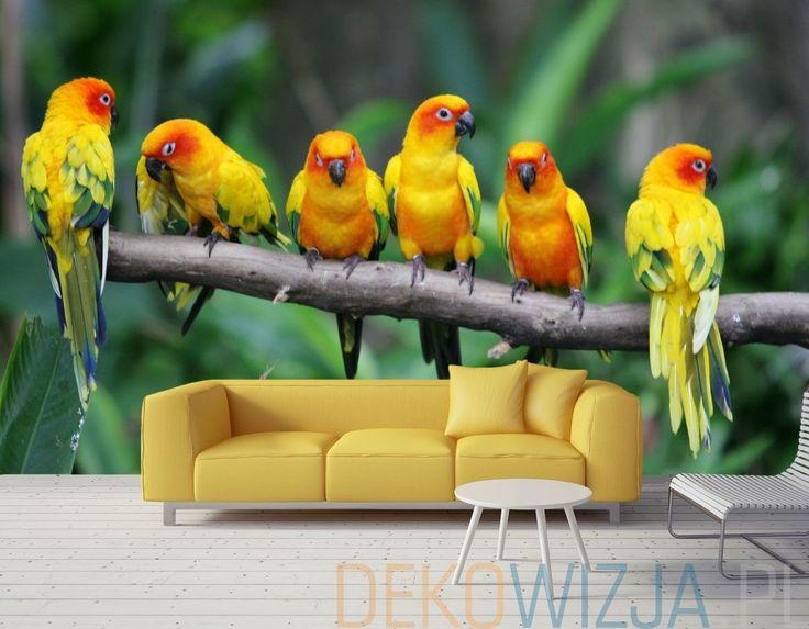 Fototapeta z papugami.