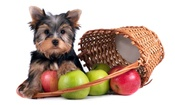 Best and Worst 'People' Food for Dogs and Cats