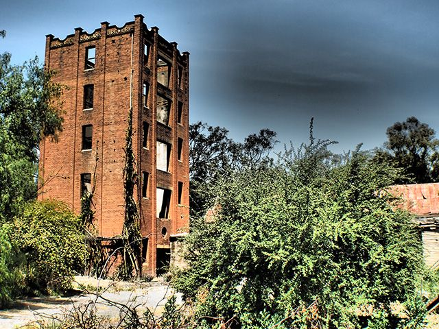 Abandoned Lincoln Oakbank Brewery is slowly being reclaimed by nature. Now a haven for climbing plants, birds and clusters of spiders in the skeleton of the original five-storey tower, Narrandera, NSW