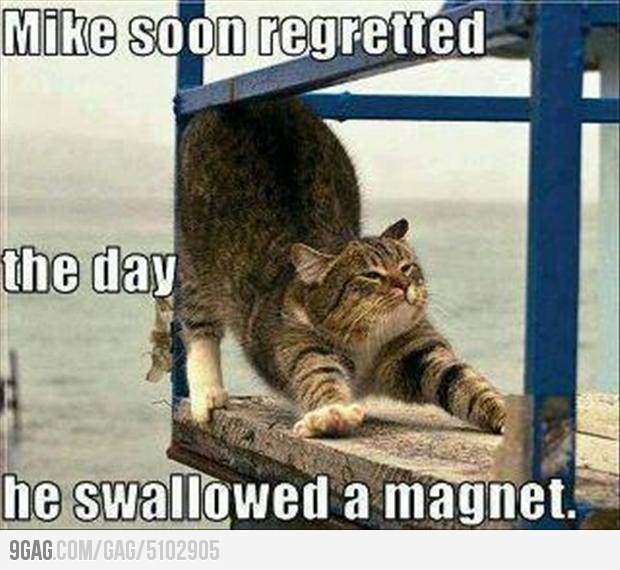 funny: Funny Animals, Funny Things, Magnets, Funny Cats, Funny Picture, Funny Stuff, Funnies, Humor
