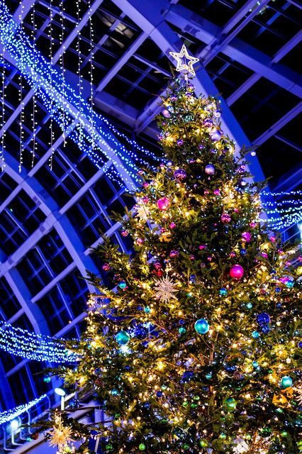 784 best ~29~Magical Christmas Lights~ images on Pinterest ...