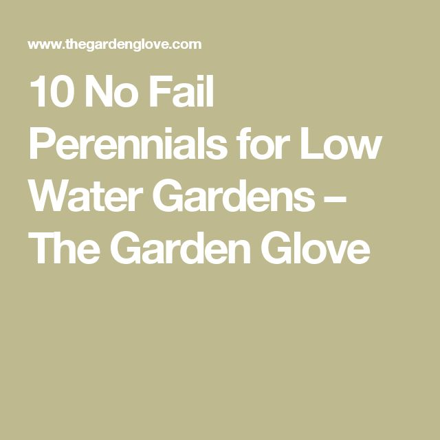 10 No Fail Perennials for Low Water Gardens – The Garden Glove