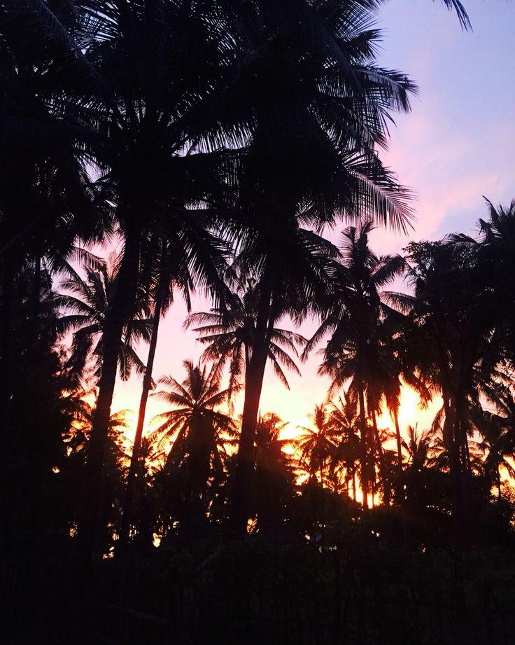 Palm tree sunset at Captain Coconuts Gili Air