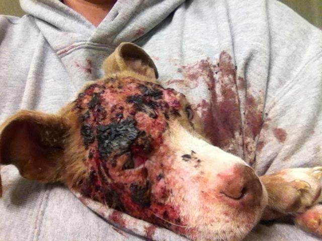 92 best HORRIFIC images on Pinterest | Animal rescue ...