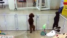 Excited puppy spots its owner | Gif Finder – Find and Share funny animated gifs