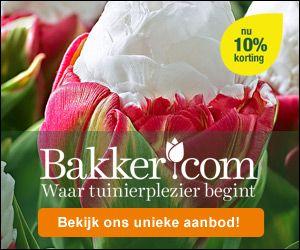 Bloembollen planten: Zie ons uitgebreide schema voor plant en bloeitijden. Tevens plant en aankoop adviezen.