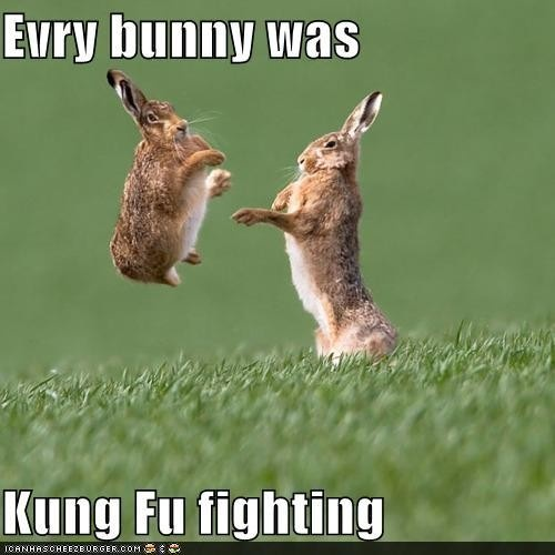 No Words...Fu Fight, Kungfu, Animal Jokes, Kung Fu Pandas, Funny Bunnies, Funny Pictures, Funny Stuff, Funny Animal, So Funny