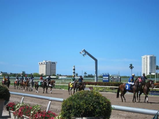 For a little gambling, try Gulfstream Park Racing & Casino in Hallandale Beach