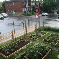 Une cour avant d'Ahuntsic transformé en potager productif. Ces jardiniers ont conçu des boîtes de culture surélevées. Un document PDF bien fait sur l'agriculture urbaine: http://agriculturemontreal.com/pdf/gpc_ate.pdf