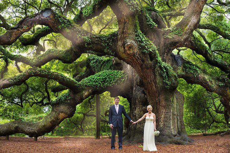 Angel oak wedding