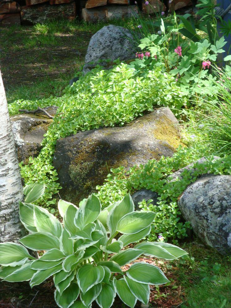 18 best shade rock garden images on pinterest gardening for Rock garden designs shade