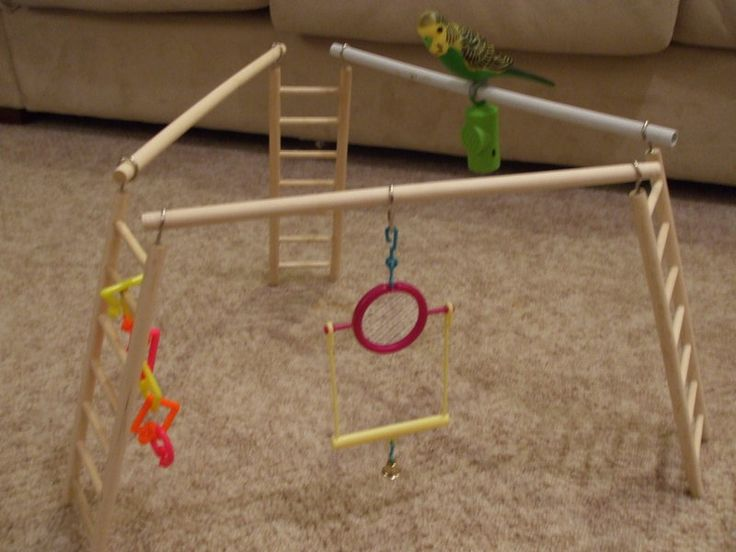 PLAYGYM step-by-step guide - easy and fun playgym anyone can make ! - Talk Budgies Forums