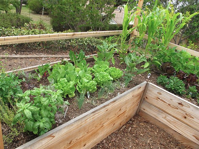 deer proof vegetable garden ideas - Deer Proof Vegetable Garden Ideas
