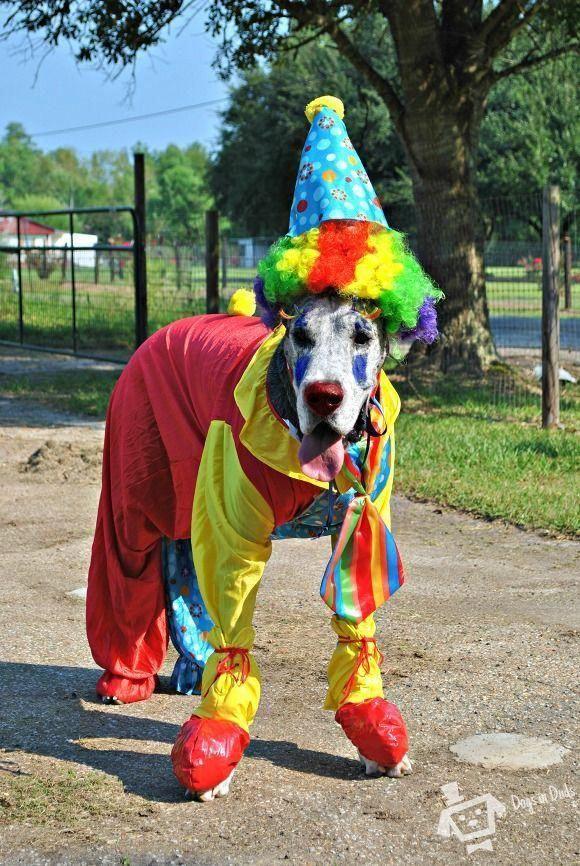 Clown Great Dane Costume #Dogsupplies | Dog supplies | Best