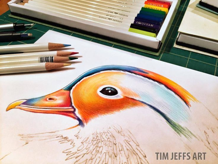 Mandarin Duck Drawing Time! Starting in on one very colorful duck! Drawn with @TombowUSA Irojiten colored pencils, Woodlands Dictionary Set.