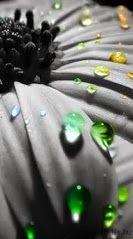 Ingyen letölthető Sony Ericsson háttérképek Free downloads of Sony Ericsson ringtones http://www.xn--csenghang-letlts-pqb5ut7d.hu/aino-hatterkepek/