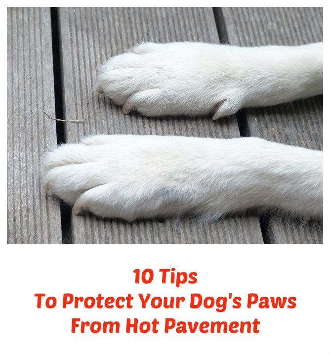 Hot pavement can and will burn a dog's paws. So what can be done to protect your dog's paws? Here are 10 tips to keep your dog or puppy from getting burned this summer... see more at PetsLady.com ... The FUN site for Animal Lovers