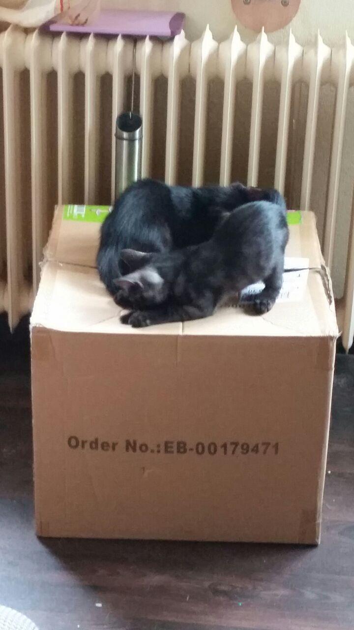 Wie immer, der Karton ist interesanter, als der Katzendbaum.