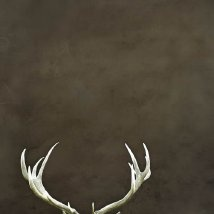 deer: Wall Colors, Wall Decor, Large Wall, Natural Photography, Antlers Prints, Deer Antlers, Antlers Wall, Rustic Decor, Antlers Art
