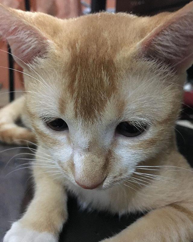 ミニー#chuty#srilanka#temple#cat#cats#catstagram#cute#cutie#kitty#eyes#gato#gatto#kucing#katze#popoki#happy#Love#straycat #minnie#愛娘#愛猫#愛猫家#ミニー #ミニーちゃん#女の子#gril#おてんば娘 #大好き#かわいい #親バカ部