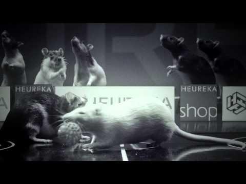 Rat basketball in Heureka