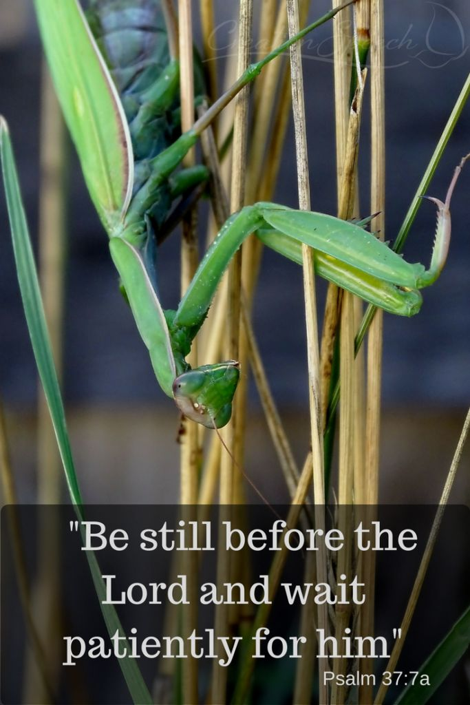 Praying Mantis give us a picture of how to wait on God. Psalm 37:7.