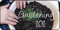 5 Vegetable Gardening tips for beginners